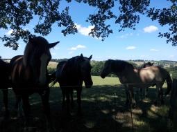 baziert_horses
