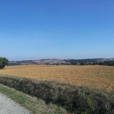 Bazian view 2